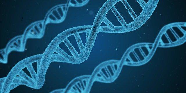 DNA-strängar