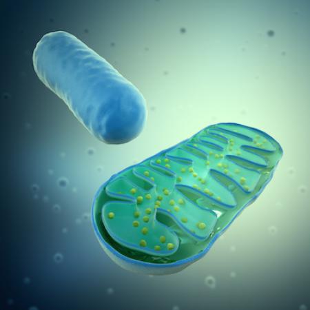 3D-bild av en mitokondri och dess uppbyggnad
